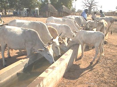 家畜水飲場